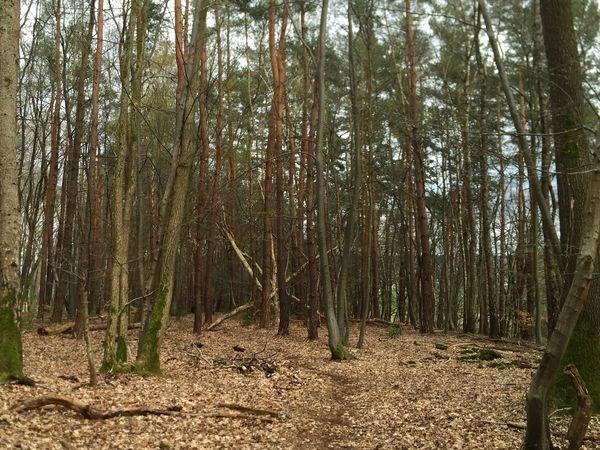 Vorsicht vor herabfallenden Ästen und umstürzenden Bäumen