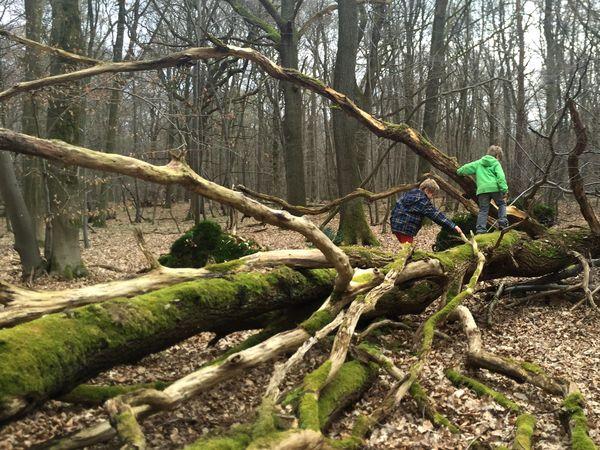 Klettern auf einem umgestürzten Baum