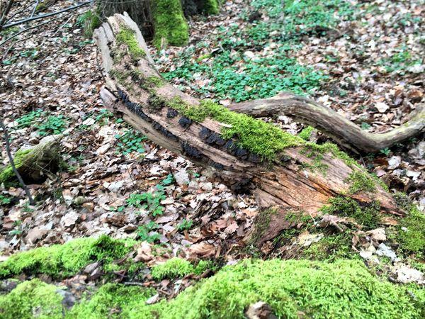 Abgestorbenes Holz gibt anderen Pflanzen Nahrung