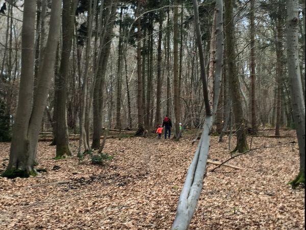 Wandern im Totholzwald