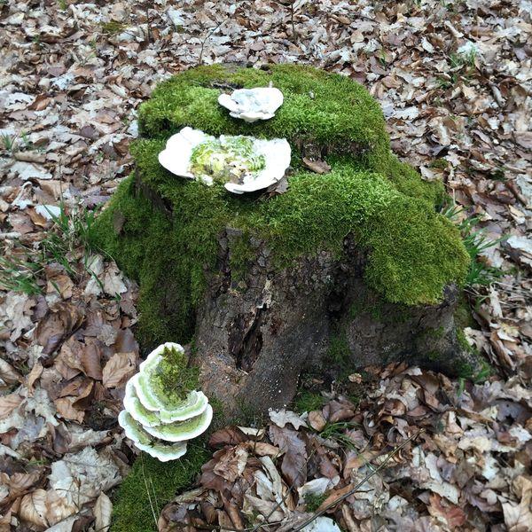 Pilze und Moos bewohnen einen Baumstumpf