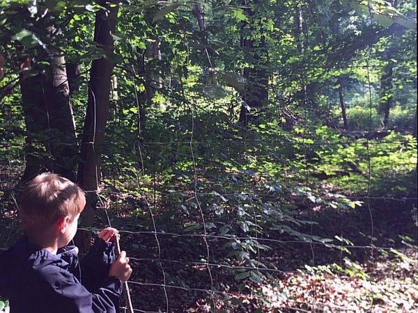 Ein Junge steht an einem Drahtzaun