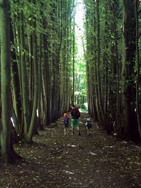 Allee im Wald des Kasbachtals
