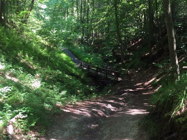 Holzbrücke auf dem Wanderweg durch das Kasbachtal
