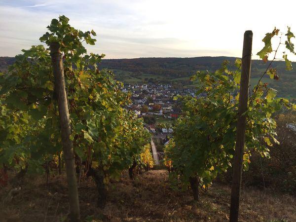 Rotweinwanderweg Blick nach Heimersheim, Bad Neuenahr