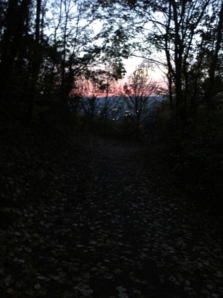 Abendrot im Wald, Nachtwanderung Landskrone, Bad Neuenahr