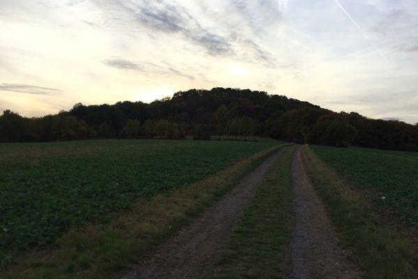 Feldweg zur Landskrone, Bad Neuenahr