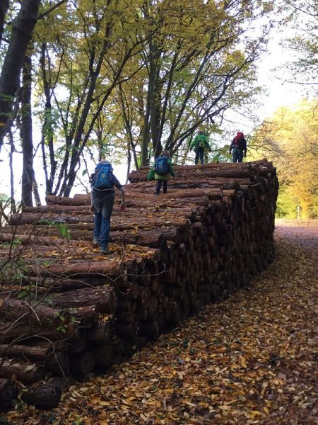 Klettern auf Baumstämmen, Waldweg zur Landskrone, Bad Neuenahr
