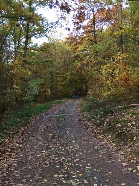 Waldweg zur Landskrone, Bad Neuenahr