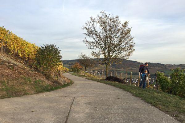 Rotweinwanderweg auf dem Weg zur Landskrone, Bad Neuenahr