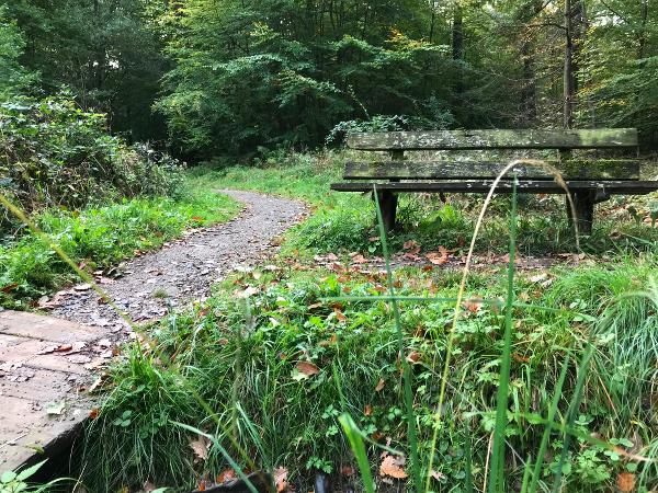 Bank am Wegrand im Wald
