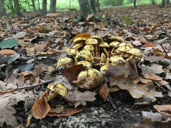 Pilze am Wegesrand im Wald
