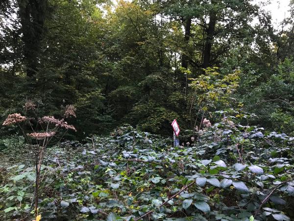 Schild im Wald zwischen Büschen