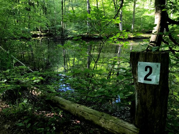 Wegweiser im Wald an einem Teich